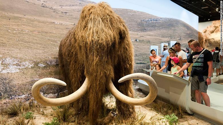 Los científicos planean resucitar a los extintos mamuts lanudos en un plan  de Parque Jurásico de la vida real - Alerta Geo